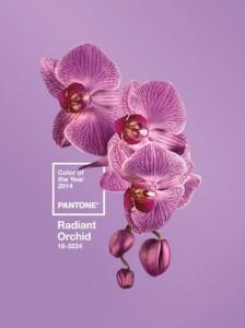 Culoarea anului 2014 in design interior - Radiant Orchid