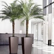 plante_care_purifica_aerul_mobilier